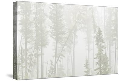 Canada, Ontario, Ear Falls. Forest in fog.-Jaynes Gallery-Stretched Canvas Print
