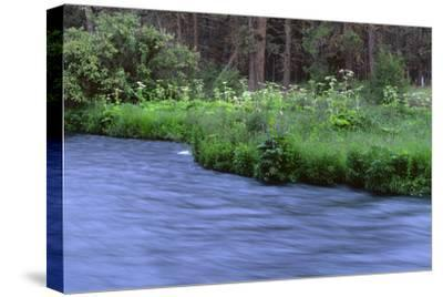 Oregon. Deschutes NF, early summer wildflowers and the Metolius River-John Barger-Stretched Canvas Print