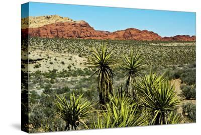 Soap tree yucca, yucca elata, Red Rock Canyon, National Conservation Area, Nevada, USA-Michel Hersen-Stretched Canvas Print
