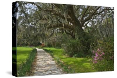 USA, South Carolina, Charleston. Stone pathway in Magnolia Plantation.-Jaynes Gallery-Stretched Canvas Print