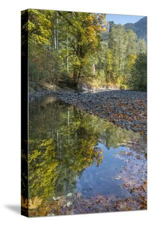 USA, Washington State, Olympic National Forest. Fall forest colors reflect in water.-Jaynes Gallery-Stretched Canvas Print