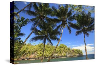 Hawaiian Tropical Botanical Gardens, near Hilo, Big Island, Hawaii, USA Palm trees.-Stuart Westmorland-Stretched Canvas Print