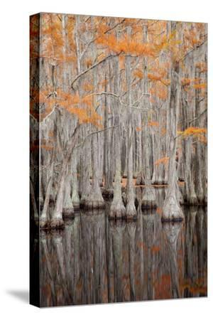 USA, George Smith State Park, Georgia. Fall cypress trees.-Joanne Wells-Stretched Canvas Print