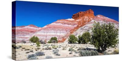 Evening light on the Cockscomb, Grand Staircase-Escalante National Monument, Utah, USA-Russ Bishop-Stretched Canvas Print