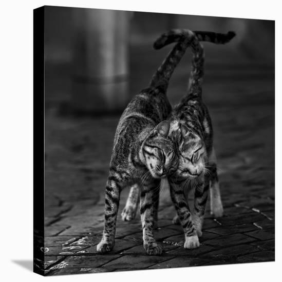 Untitled--Stretched Canvas Print