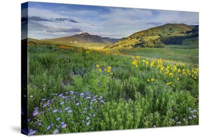 'USA, Colorado, Crested Butte. Landscape of wildflowers ...