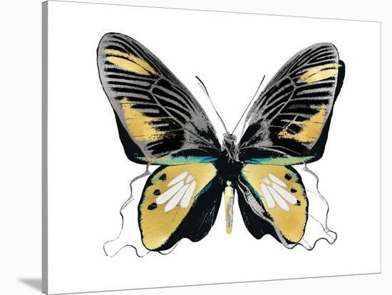 Vibrant Butterfly VI-Julia Bosco-Stretched Canvas Print