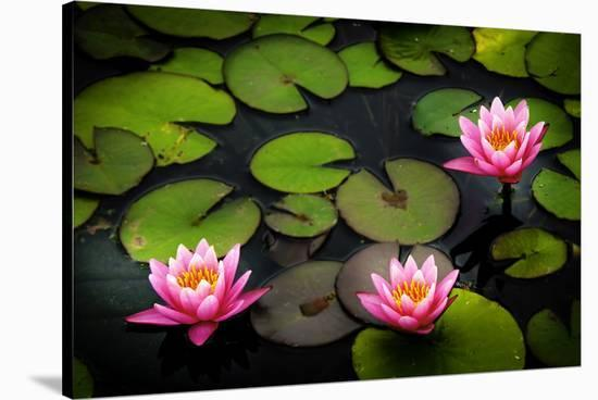 Water Lily Pond in Park--Stretched Canvas Print