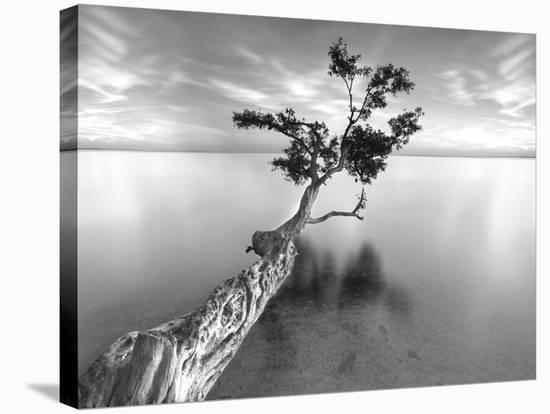 Water Tree XIII-Moises Levy-Stretched Canvas Print