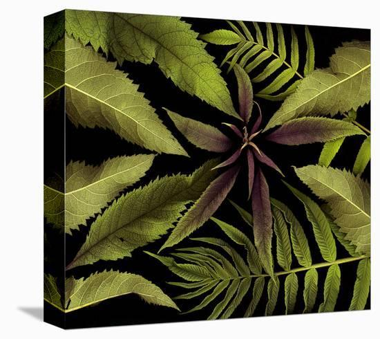 Weed June red green Foliage--Stretched Canvas Print