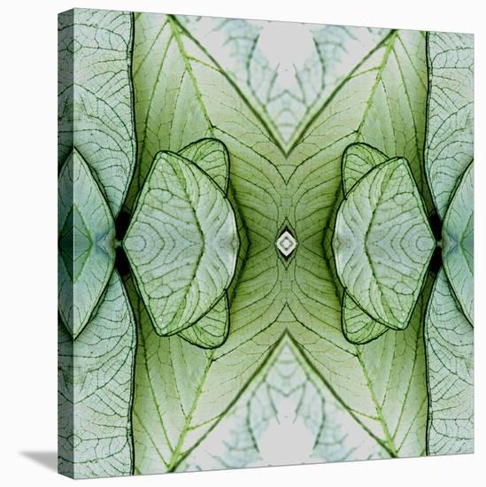 White Caladium 3-Rose Anne Colavito-Stretched Canvas Print
