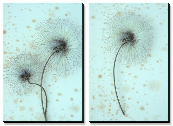 White Clematis-Den Reader-Canvas Art Set
