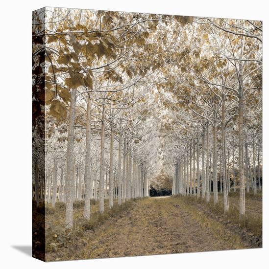 White Gold-Assaf Frank-Stretched Canvas Print