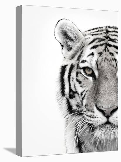 White Tiger-Design Fabrikken-Stretched Canvas Print