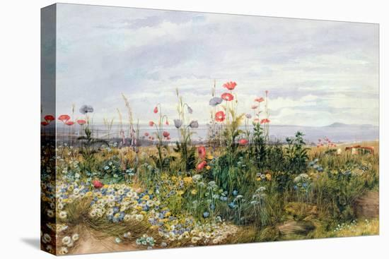 Wildflowers with a View of Dublin Dunleary-Andrew Nicholl-Stretched Canvas Print
