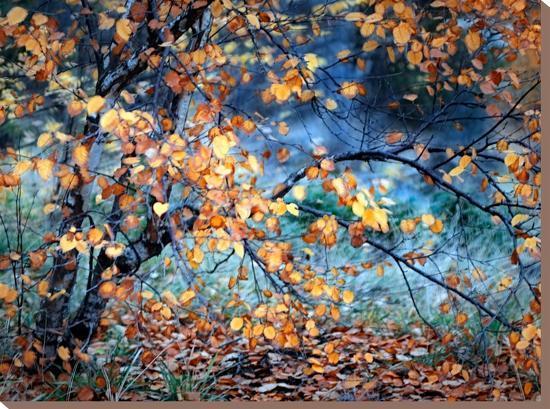 Yellow Heart-Ursula Abresch-Stretched Canvas Print