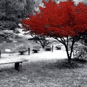 Reds image
