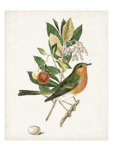Antique Bird, Botanical & Egg I by 0 Unknown