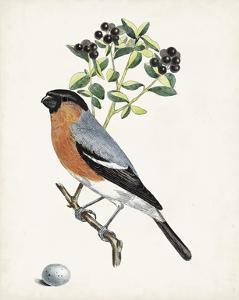 Antique Bird, Botanical & Egg IV by 0 Unknown