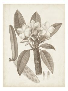 Antique Sepia Botanicals VII by 0 Unknown