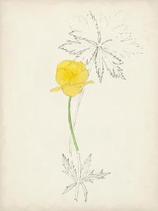 Watercolor Botanical Sketches VII by 0 Unknown