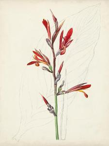 Watercolor Botanical Sketches XII by 0 Unknown
