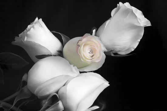 005 Roses BW-Bob Rouse-Photographic Print