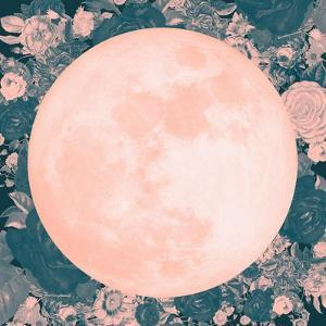 Pink Moon by 11.0