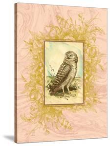 Vintage Owl by 11.0