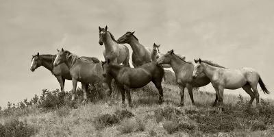 1421-Mustangs-2016-B&W-Gordon Semmens-Photographic Print