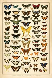 Array of Butterflies and Moths by 17.0
