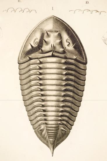 1846 Fine Victorian Trilobite Lithograph-Paul Stewart-Photographic Print