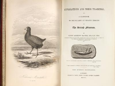 1851 Takahe Mantell's Petrifactions Book-Paul Stewart-Photographic Print