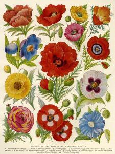 1920s UK Flowers Magazine Plate