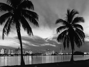 1950s Night Skyline View across the Bay Two Palm Trees Silhouetted in Foreground Miami, Florida