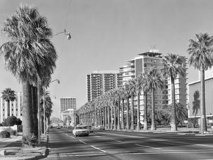 1960s Rows of Palm Trees Central Avenue Phoenix AZ