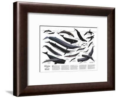 1976 Whales of the World-National Geographic Maps-Framed Art Print