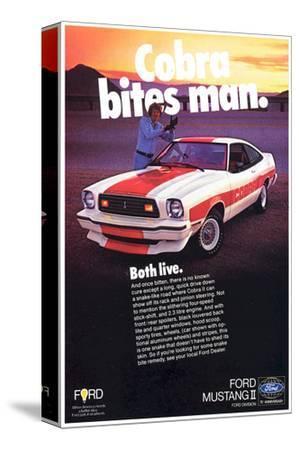 1978 Mustang - Cobra Bites Man