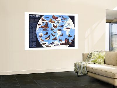 1987 Pinnipeds Around the World Map-National Geographic Maps-Wall Mural