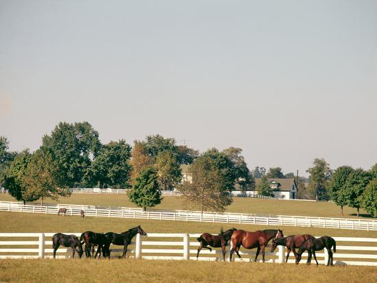 1990s Small Group of Horses Beside White Pasture Fence Late in Summer--Photographic Print