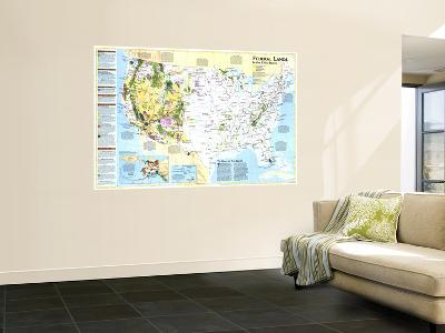 1996 Federal Lands in the Fifty States-National Geographic Maps-Wall Mural