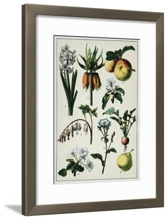 19th-Century French Botanical Print