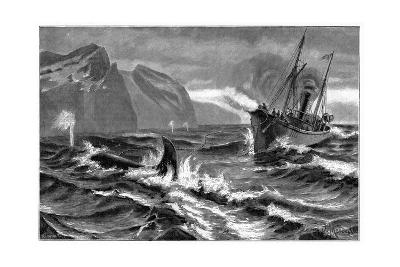 19th Century Whale Hunt-CCI Archives-Giclee Print