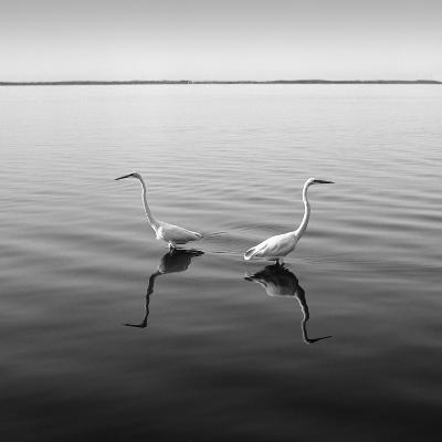 2 Herons-Moises Levy-Photographic Print