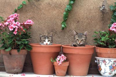 2 Kittens in Flowerpots--Photographic Print