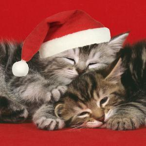 2 Kittens One Sleeping Wearing Christmas Hats