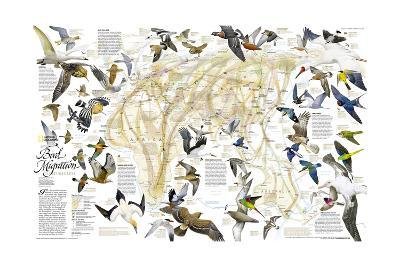 2004 Bird Migration Eastern Hemisphere Map-National Geographic Maps-Art Print