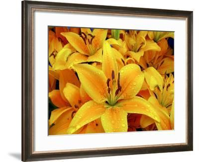 2296  21x16-The Lieberman Collection-Framed Giclee Print