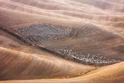 288 And Shepherd-Marcin Sobas-Photographic Print