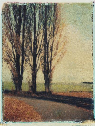 3 Poplars Late Fall-Jennifer Kennard-Photographic Print